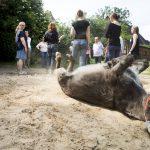Coaching Esel tiergestützt Führungskräfte Workshop