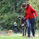 Esel Coaching für Führungskräfte