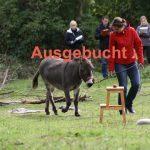 Eselcoaching in Lüneburg, Metropolregion Hamburg, Workshop für Führungskräfte
